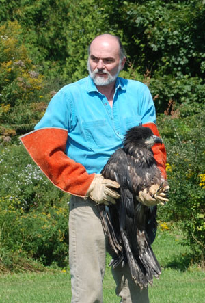 Marc holds Bald Eagle for release